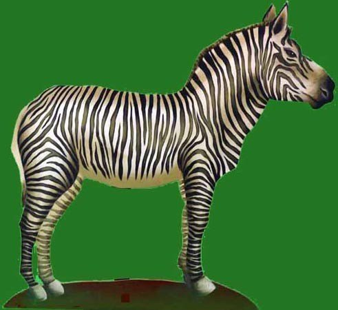 Zebra<div style='clear:both;width:100%;height:0px;'></div><span class='cat'>Animal Props</span>